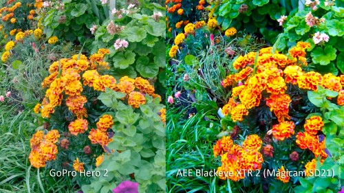 AEE Blackeye XTR 2 (AEE Magicam SD21) vs GoPro Hero 2: цветы, контрастность и насыщенность