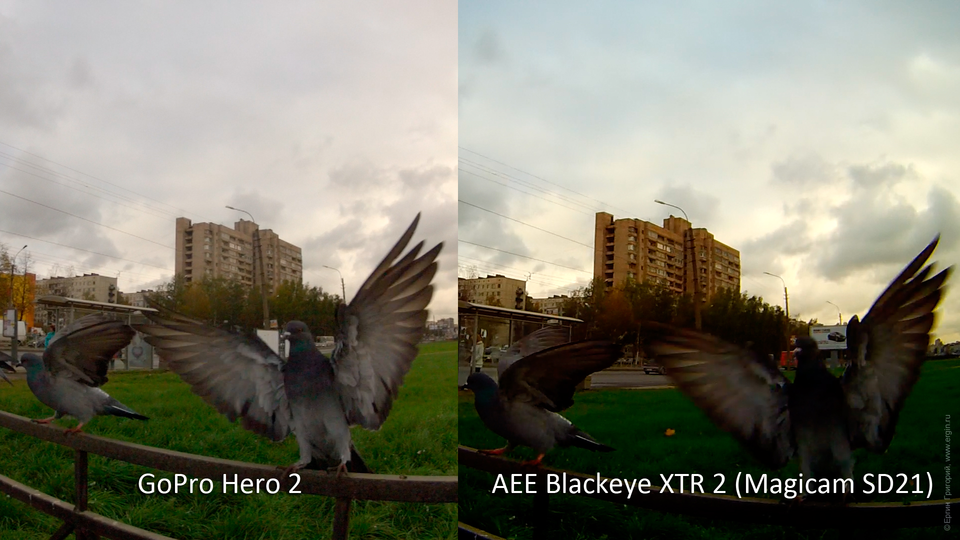 AEE Blackeye XTR 2 (AEE Magicam SD21) vs GoPro Hero 2: голубь, качество видео