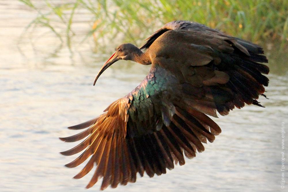 круто фото птицы хадада дача находилась элитном