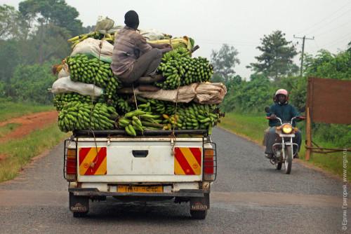Очень много бананов на машине
