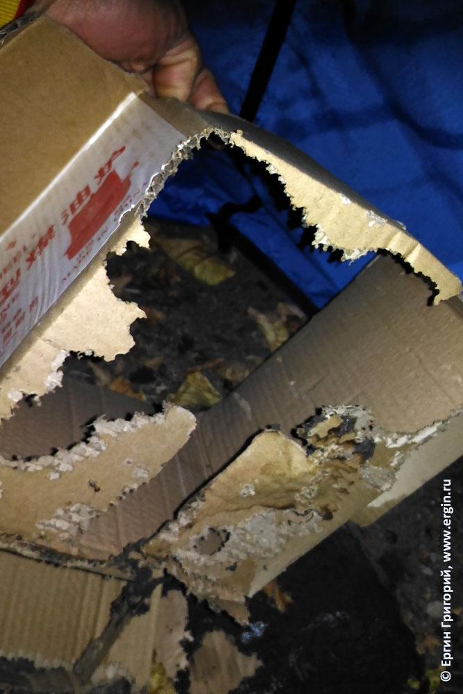 Термиты съели коробку
