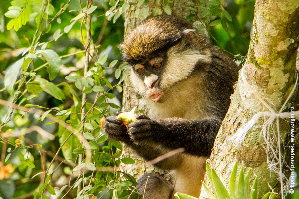 Обезьянка Уганда читает письмо