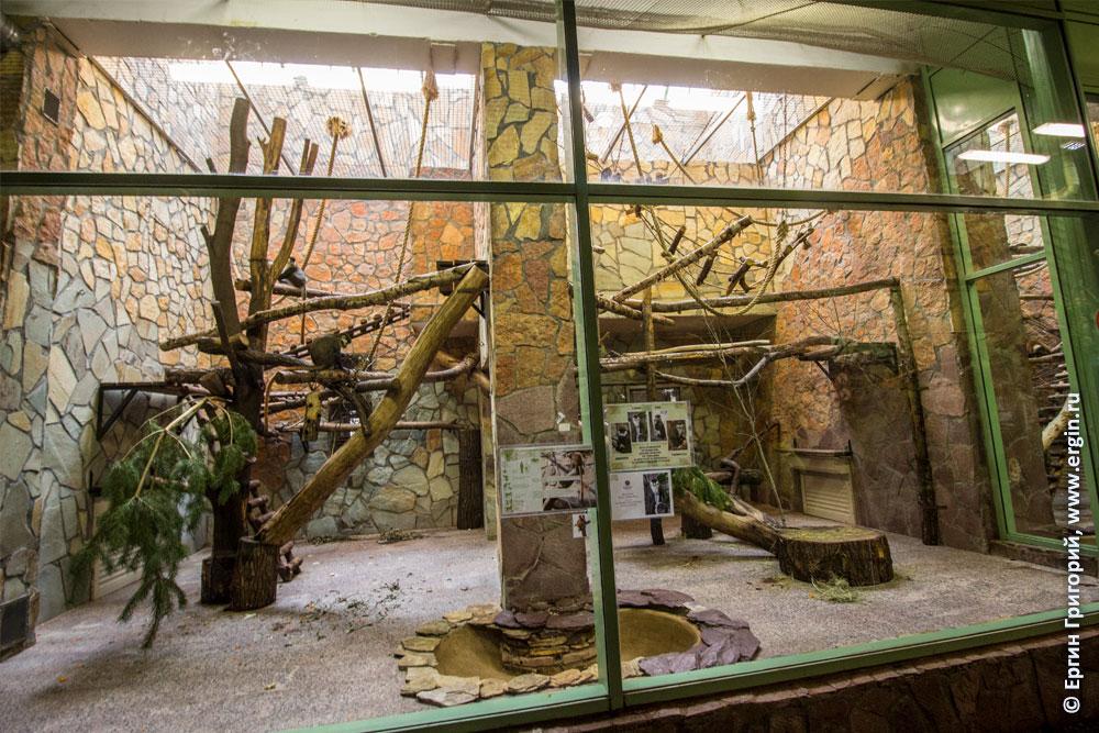 Вольер краснохвостых мартышек в Ленинградском зоопарке