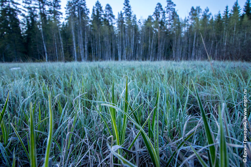 Ночью летом на траве иней Карелия