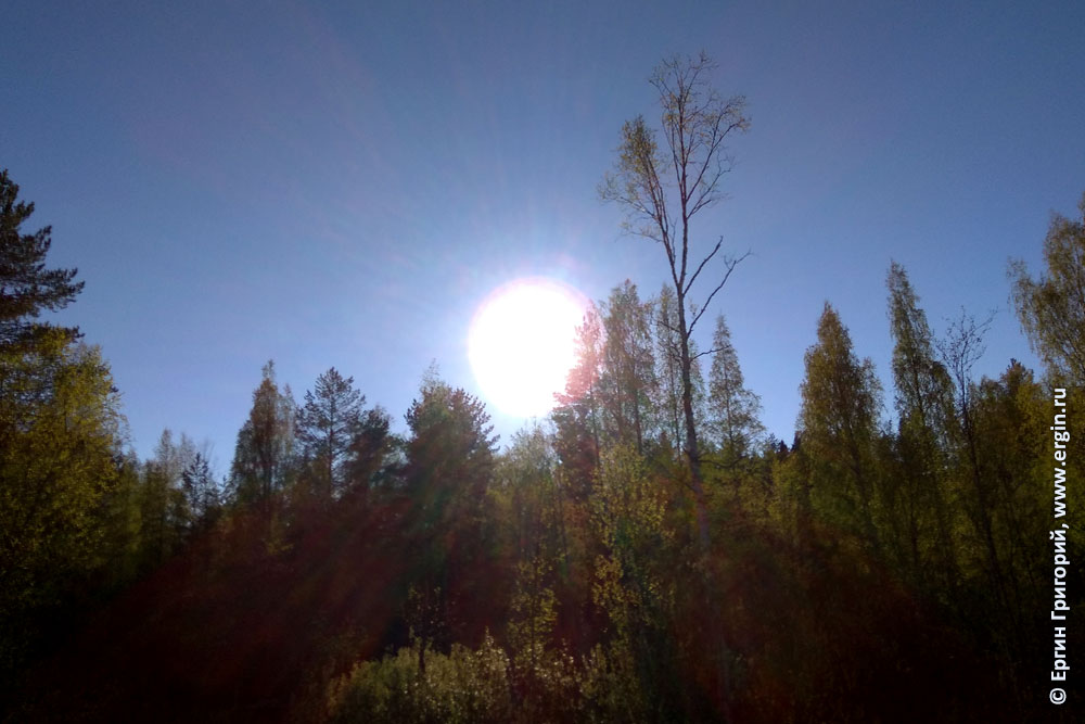 Солнце на небе деревья недалеко от Санкт-Петербурга