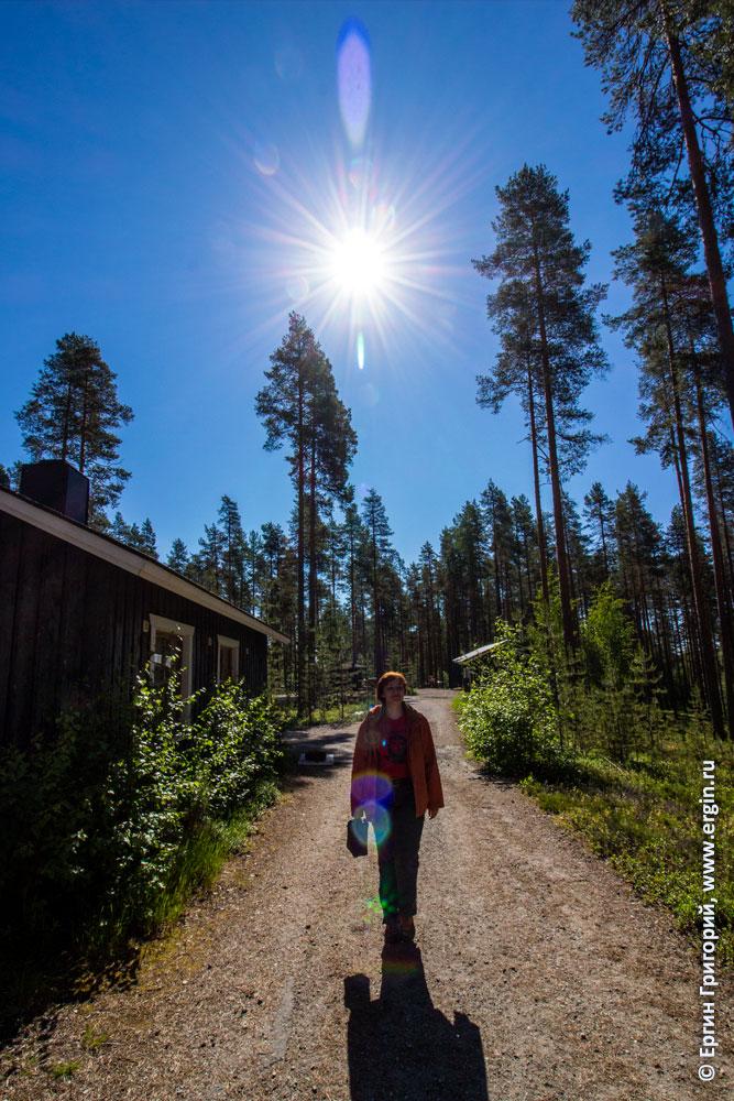 Солнце в кемпинге Нейтикоски недалеко от Лиексы