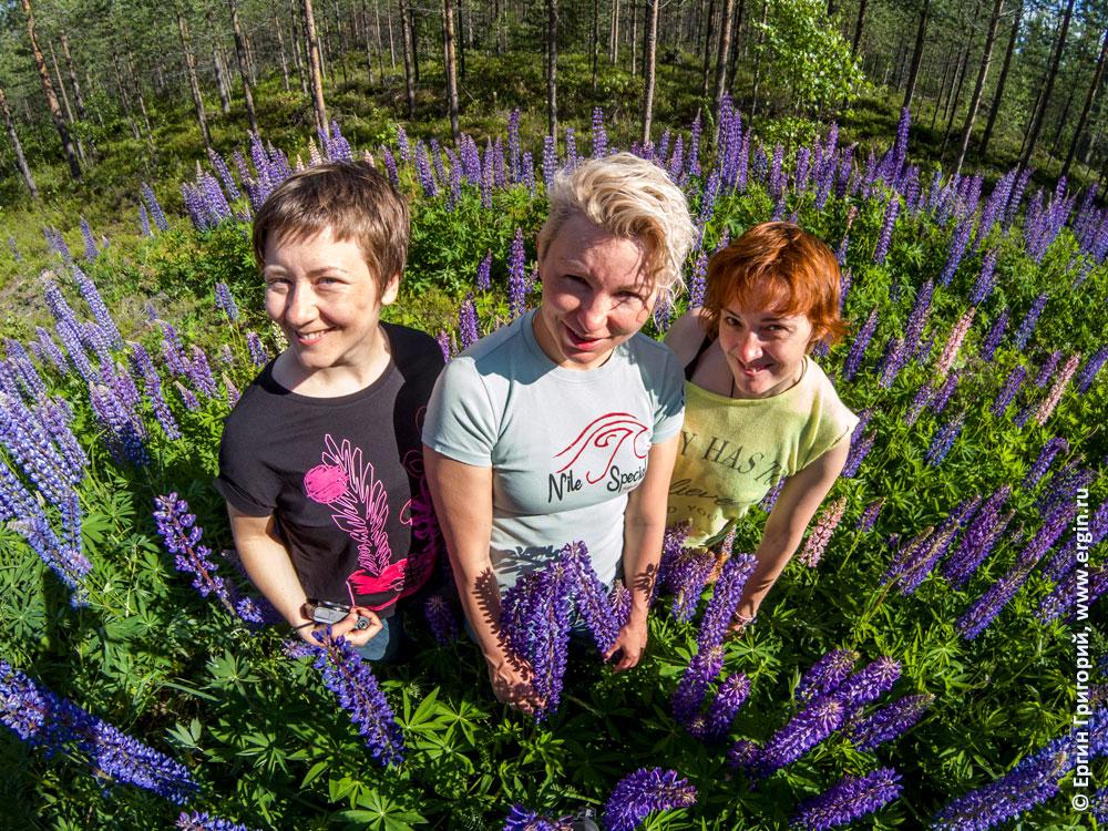 Девушки в зарослях цветов люпинов в Лиексе заповедник Руунаа