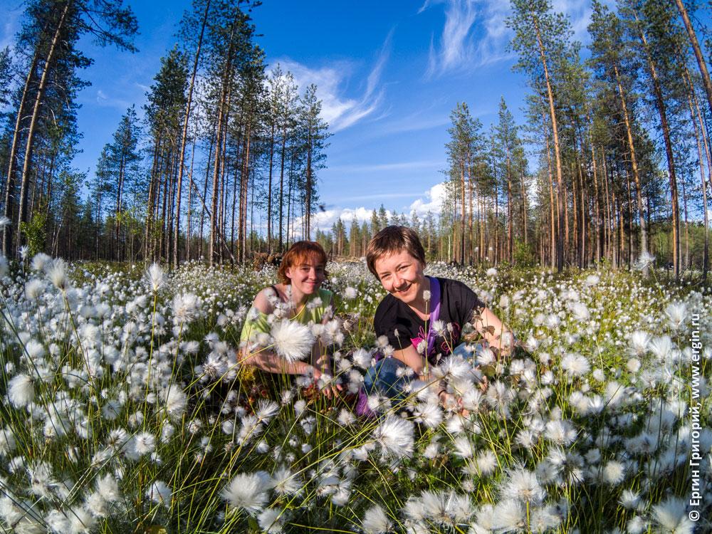 Лиекса белые пушистые цветы на болоте и девушки