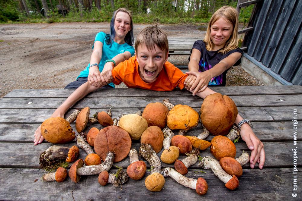 Грибное безумие в Лиексе кемпинге Нейтикоски Финляндия много грибов