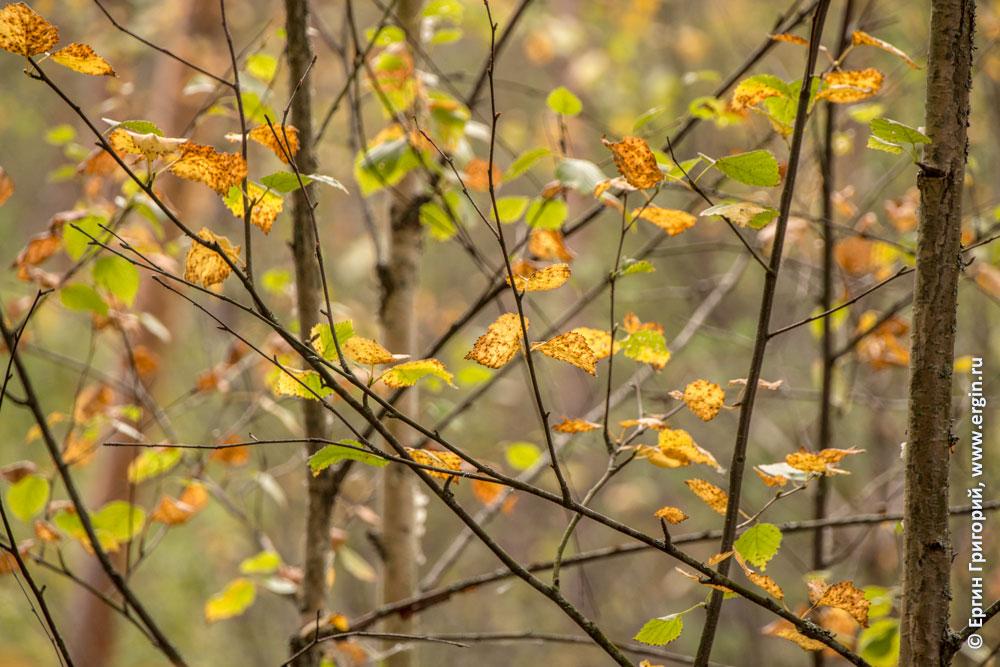 Осень пришла листья желтеют