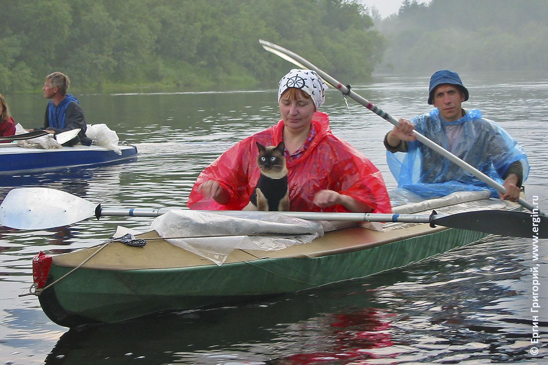 Кот плывет на байдарке в водном походе туристы