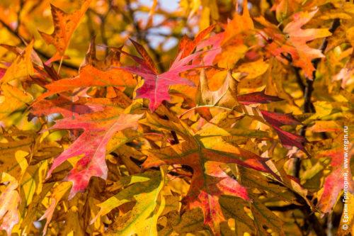 Платтлинг Германия красные листья на деревьях осенью