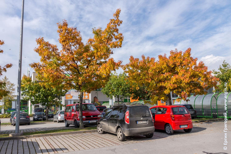 Осенние деревья в Платтлинге возле супермаркета Глобус