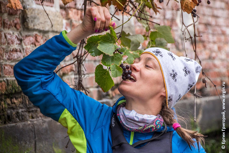 Каякер ест виноград со стены дома в Венеции