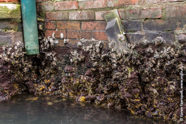 Стена в Венеции заросшая ракушками и водорослями