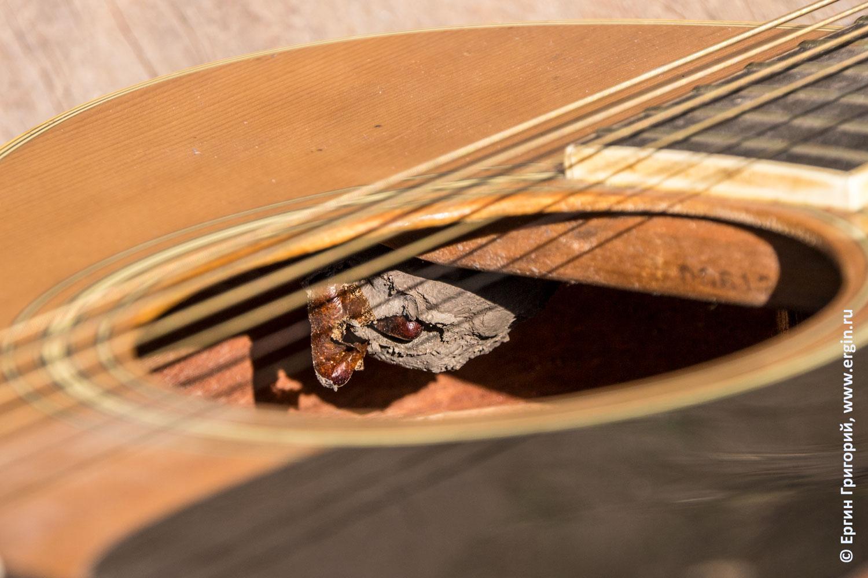 В гитаре завелись термиты