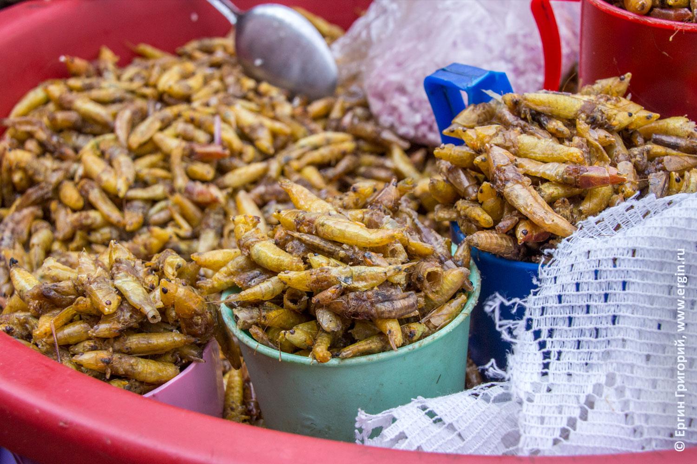 Жареные кузнечики африканский деликатес в Уганде