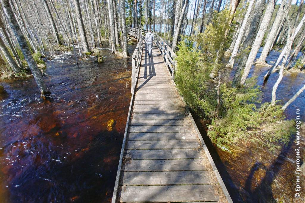Очень много воды по весне в Лиексе паводок