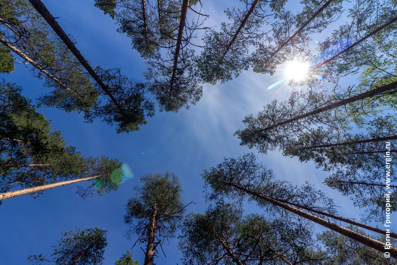 Солнце небо верхушки сосен в кемпинге Нейтикоски Лиекса