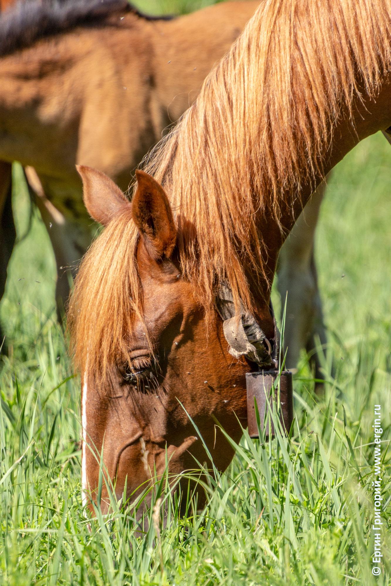 Колокольчик на шее лошади