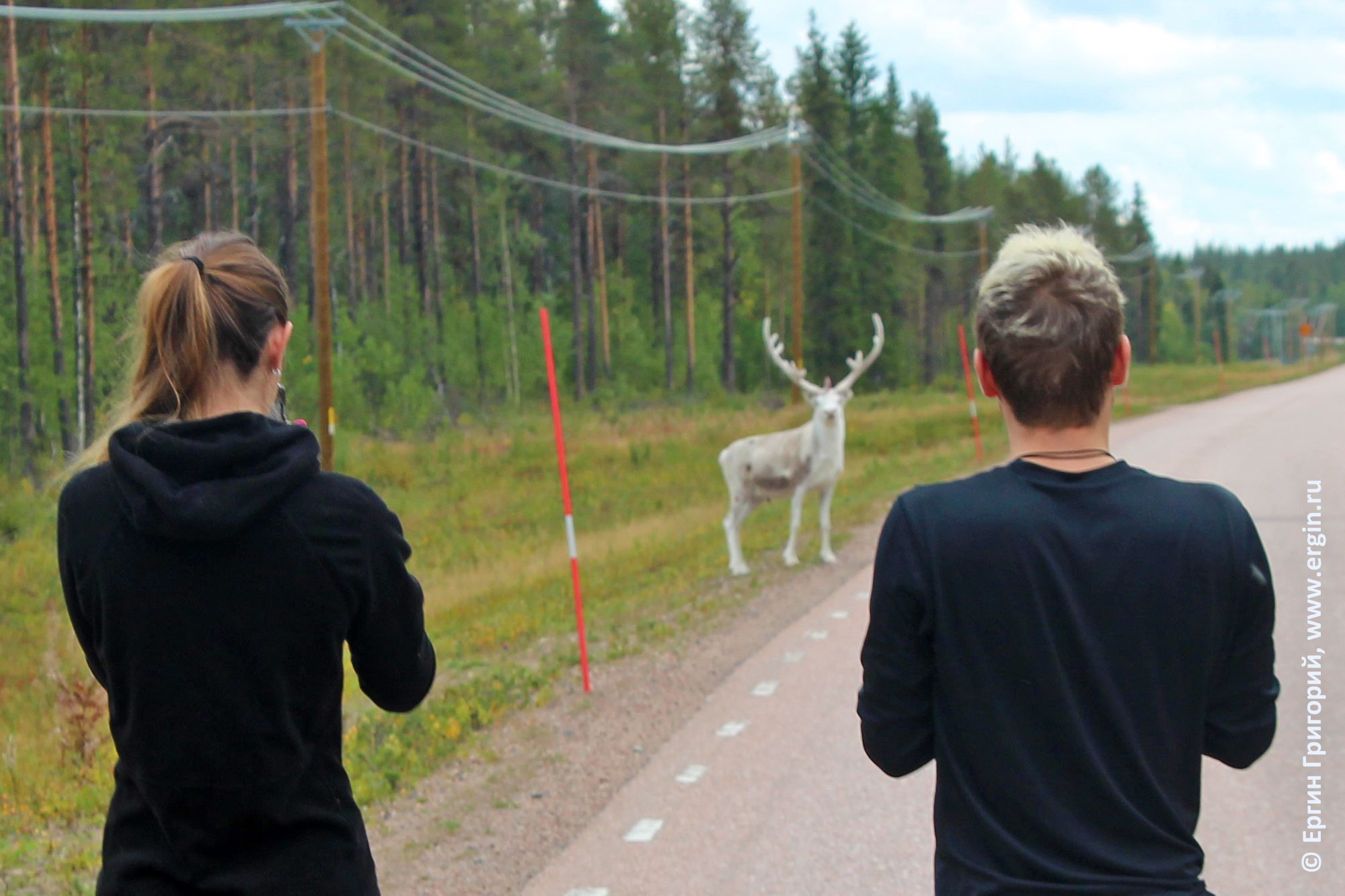 Норвегия встреча с белым оленем