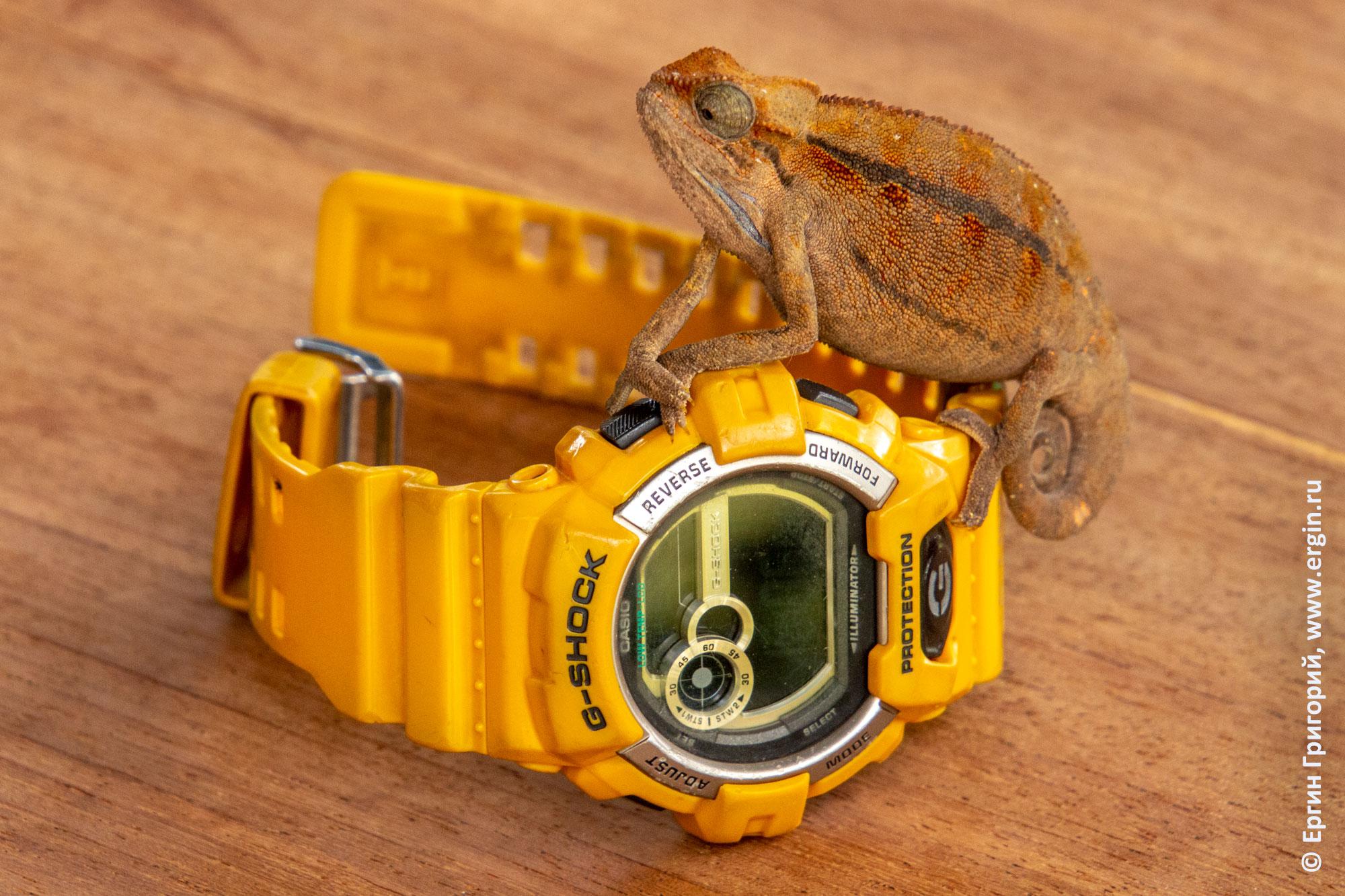 Хамелеон на часах Casio  G-Shock GLS-8900 Модуль 3422