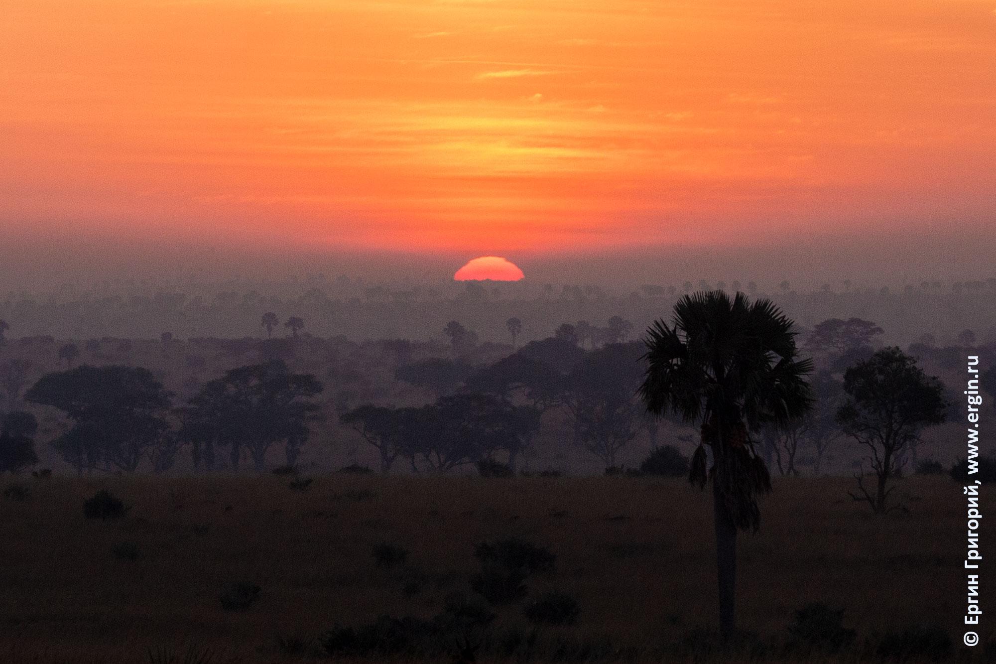 Фото настоящего рассвета над саванной в Африке Уганда