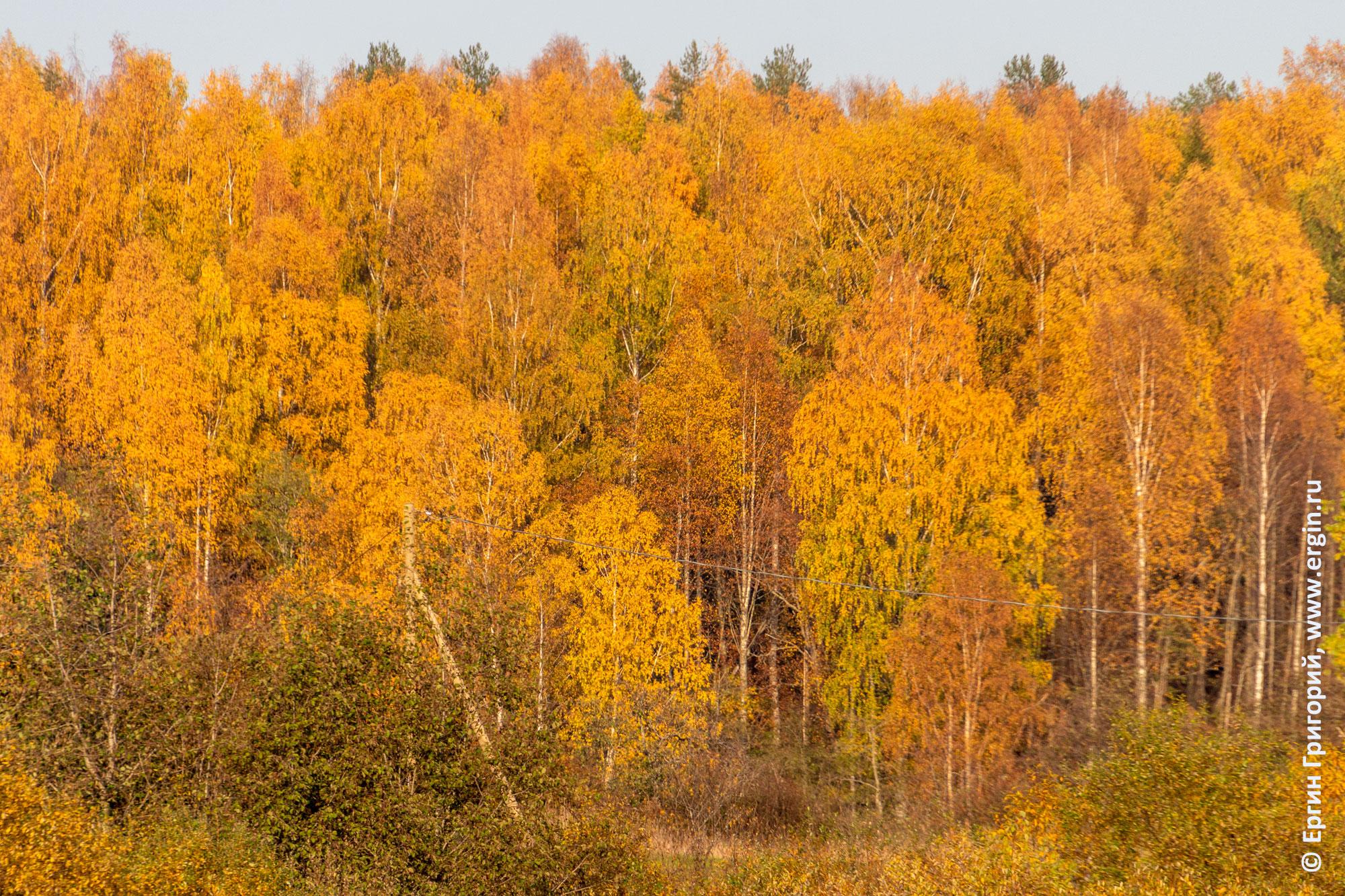 Золотая осень в поселке Тивдия