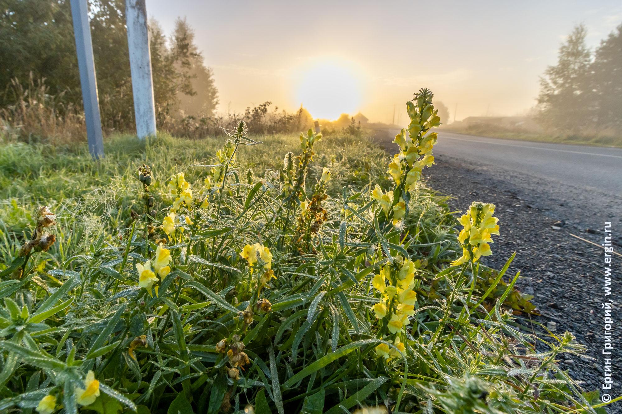Иней на траве в Тивдии и рассвет