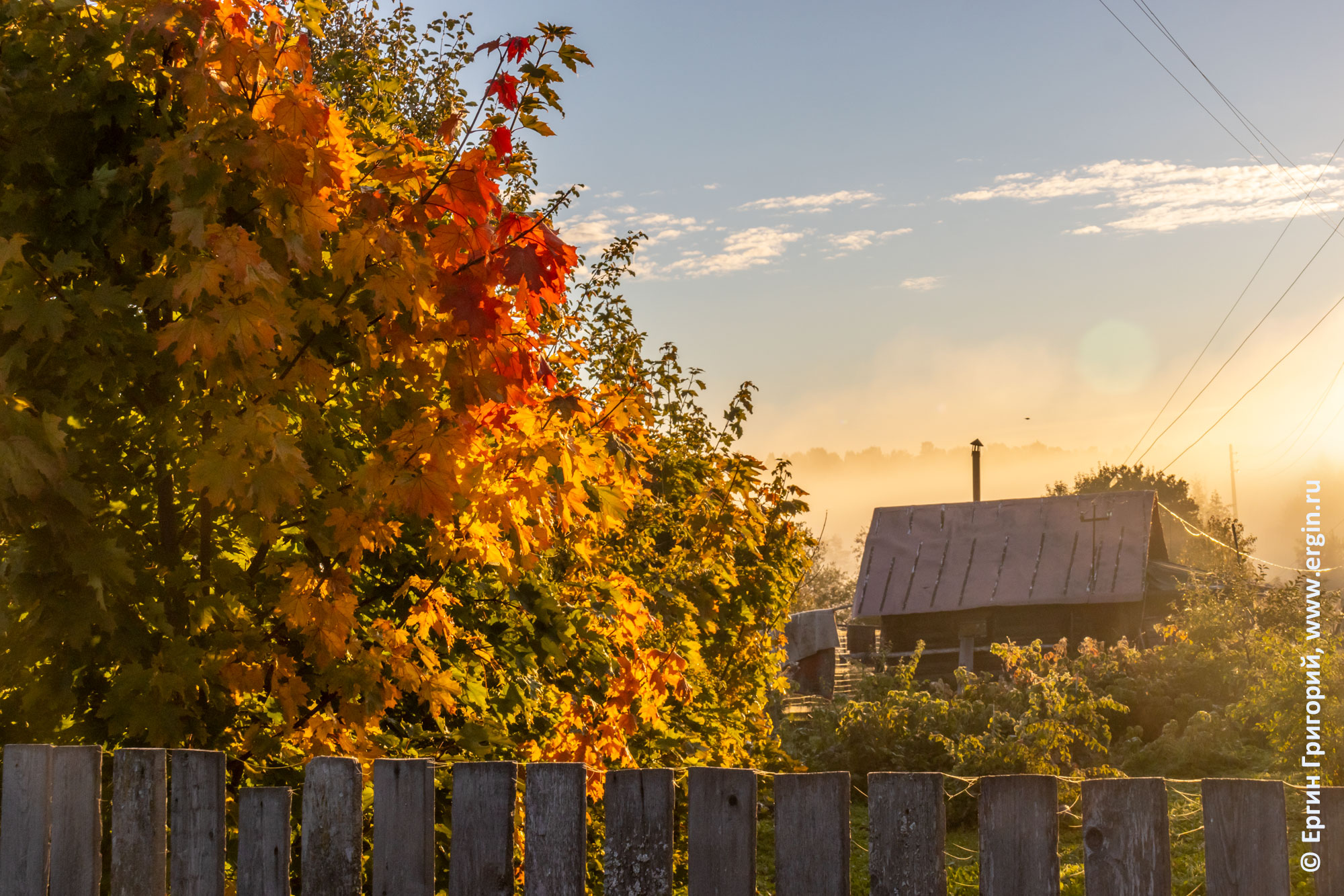 Желтые листья, осень в Тивдии